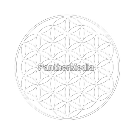 flower of life with shadow