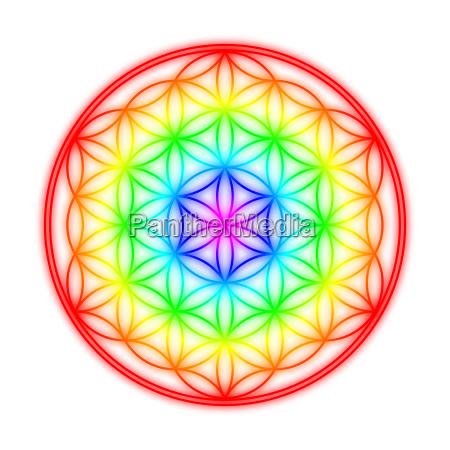 flower of life rainbow halo