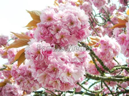 trae blomst blomster plant plante forar