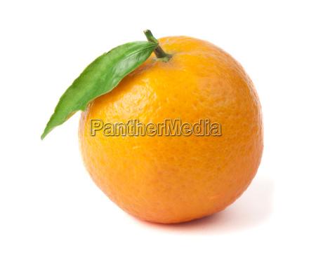 group mandarins white isolated studio shot