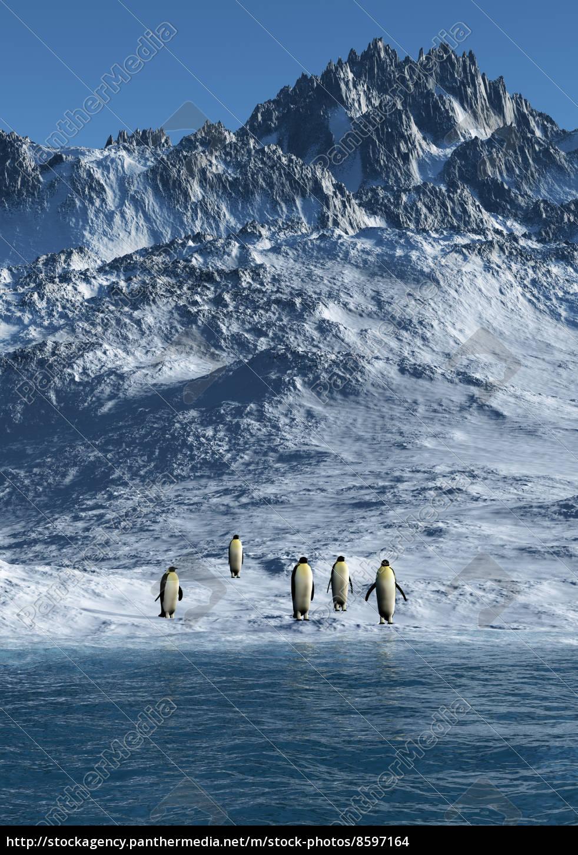 emperor, penguins - 8597164