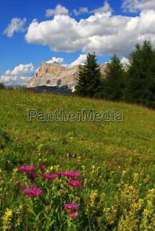 mountains plant alps alp flower flowers
