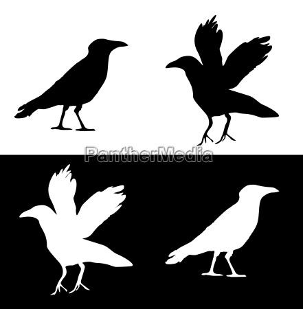 raven graphic set