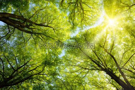 sun shines through treetops