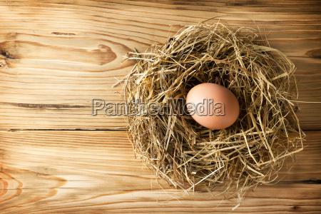 egg in nest