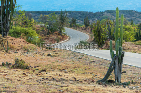 cactus and winding road