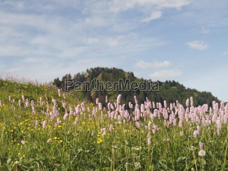herbal meadow
