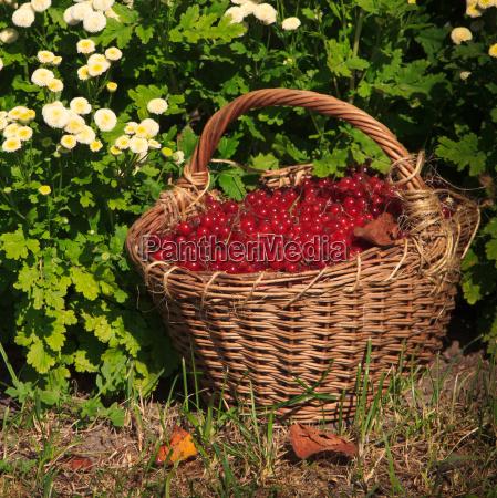 berries aliment eat
