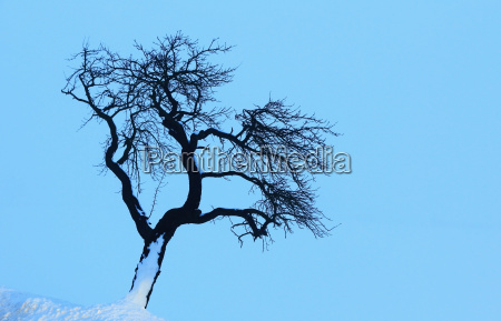 blue, tree, winter, trunk, branches, firmament - 8773458