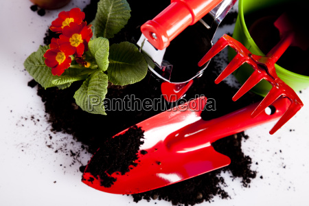 gardening equipment on green plant