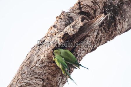 two green parrots perched on a