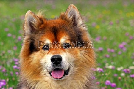 kind dog
