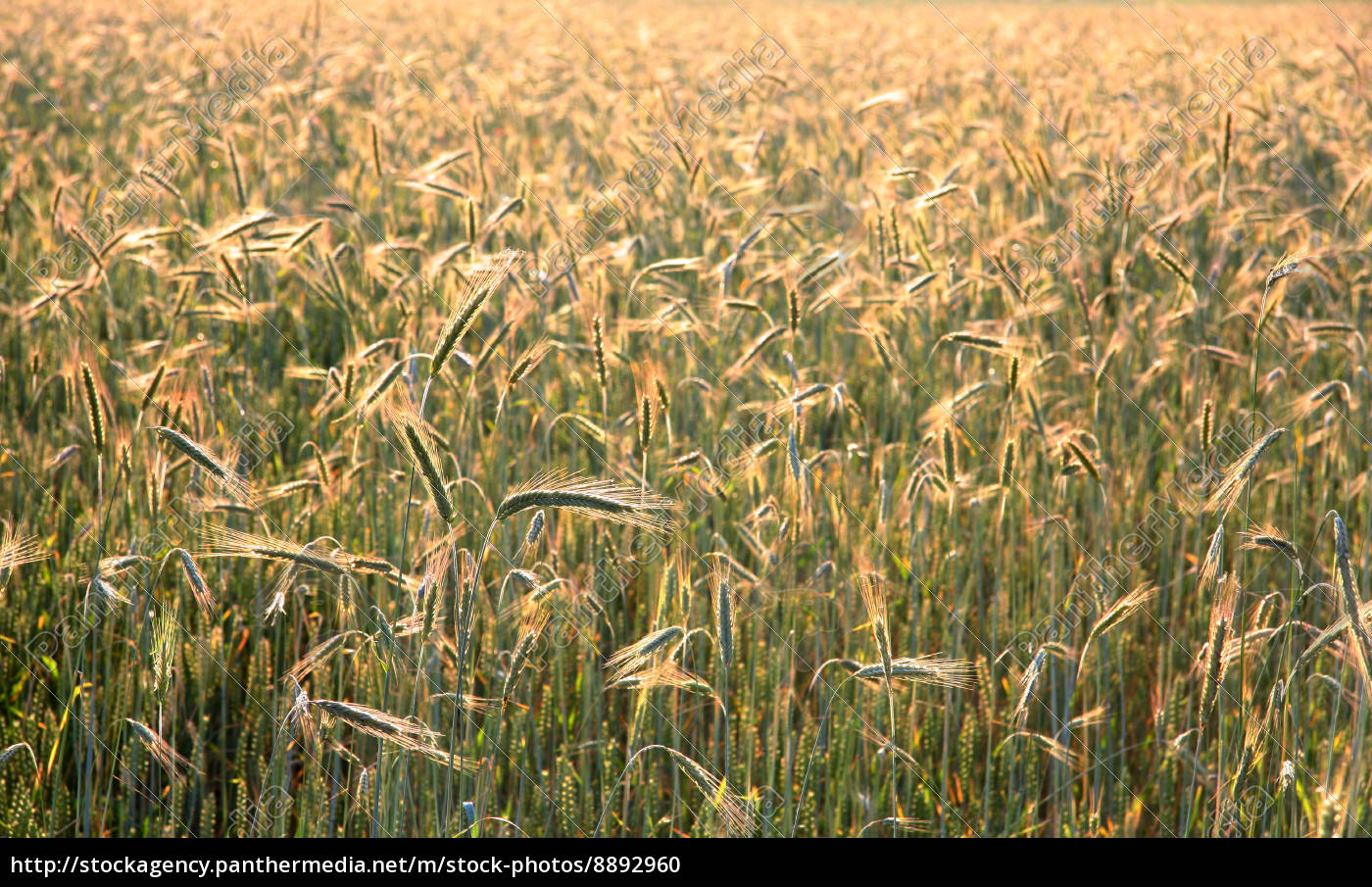 food, aliment, agriculture, farming, field, summer - 8892960