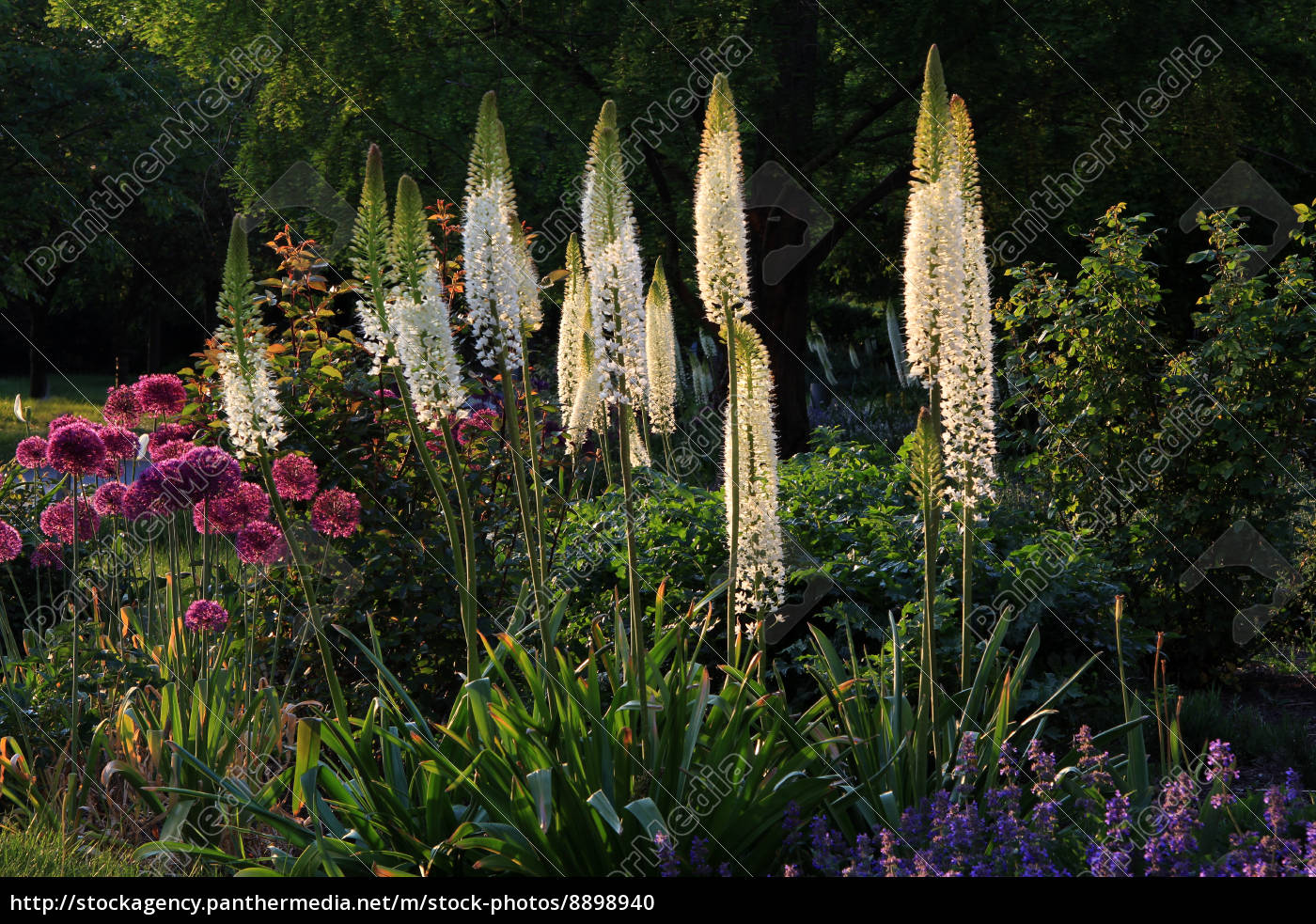 park, garden, coloured, colourful, gorgeous, multifarious - 8898940