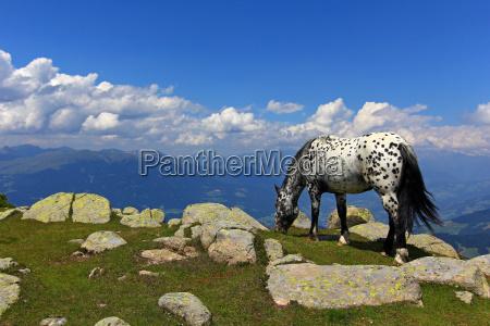 mountains horse rock browse high mountains
