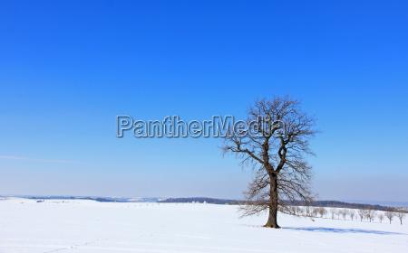 blue tree winter oak winter landscape