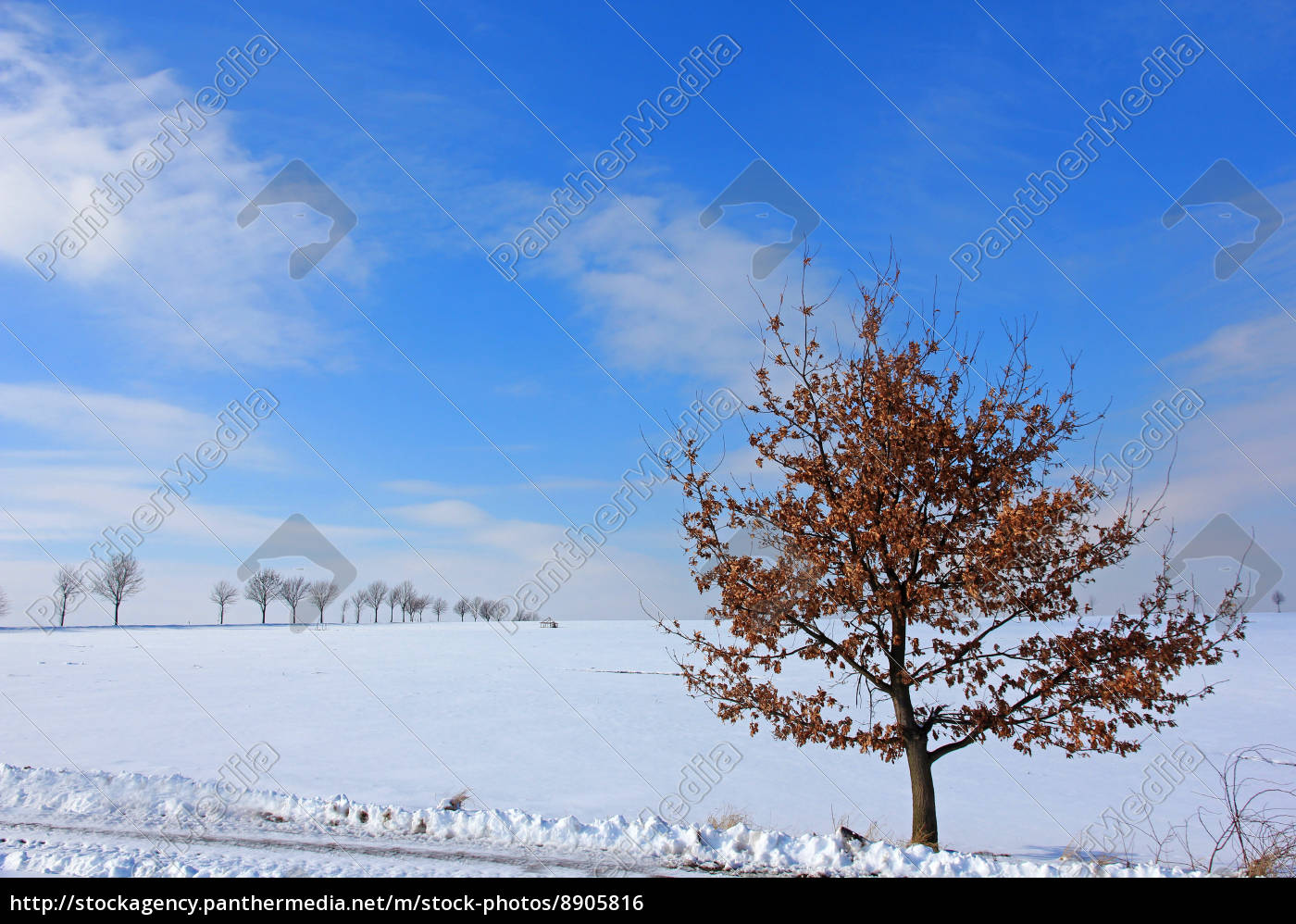 blue, tree, winter, oak, autumn foliage, firmament - 8905816