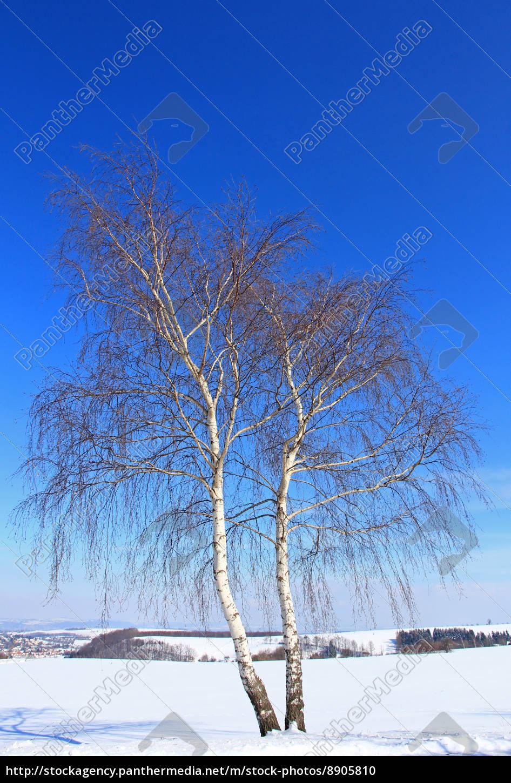 blue, trunk, ice, winter landscape, birch, firmament - 8905810