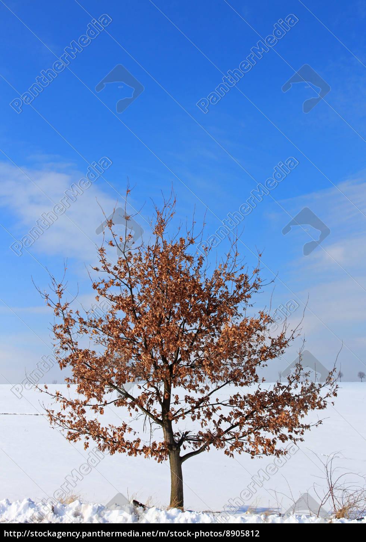 blue, winter, oak, autumn foliage, firmament, sky - 8905812