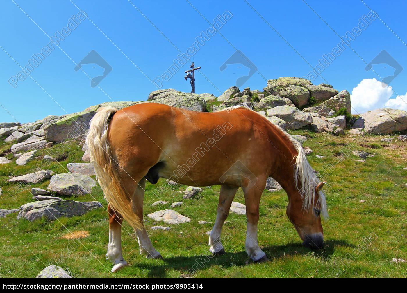 horse, rock, haflinger horse, high mountains, christ, firmament - 8905414