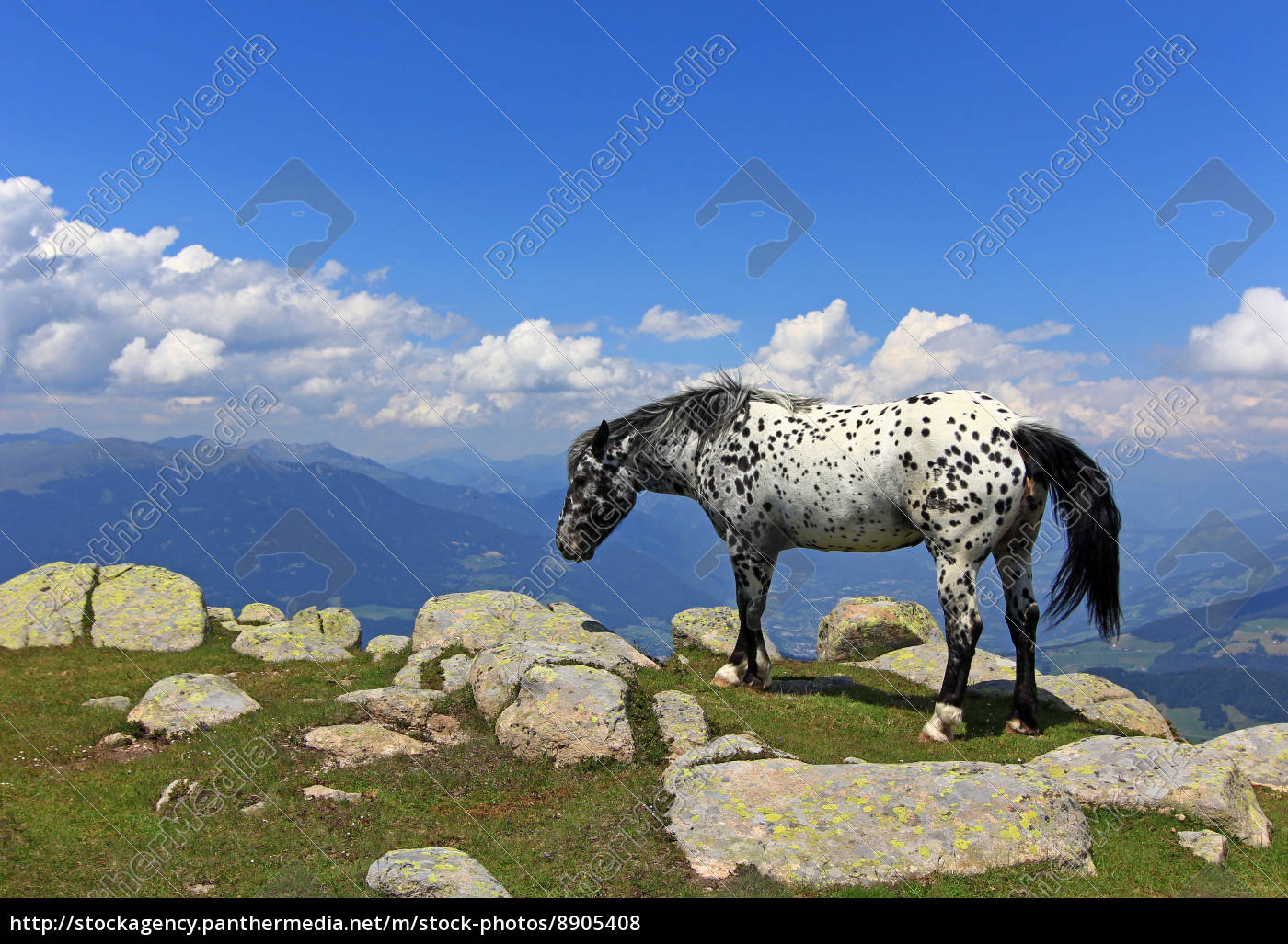 horse, summit, rock, sight, view, outlook - 8905408
