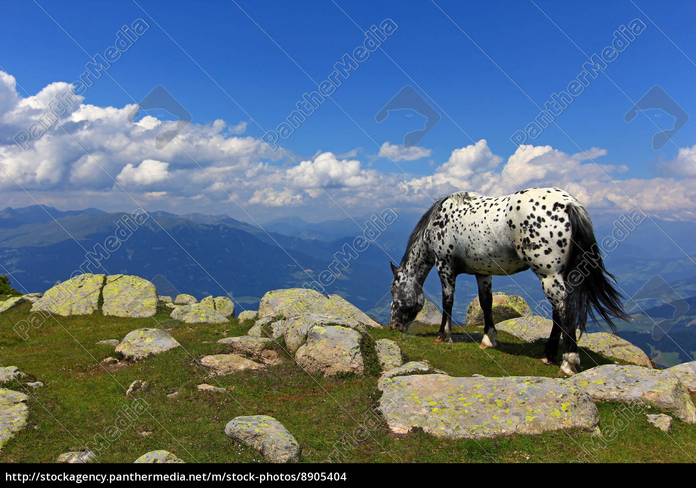 mountains, horse, rock, browse, high mountains, firmament - 8905404