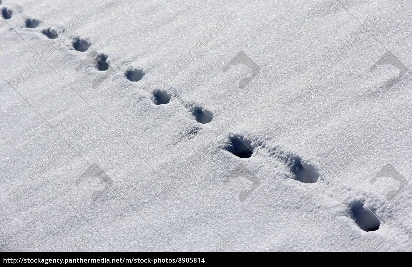 winter, sense, ice, snow, nature, tracks - 8905814
