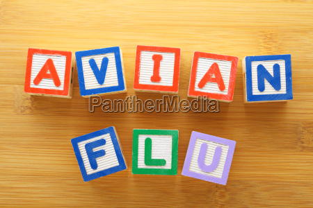 avian flu toy block