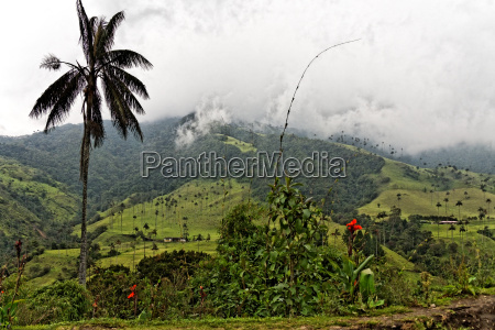 cocora valley quindio colombia