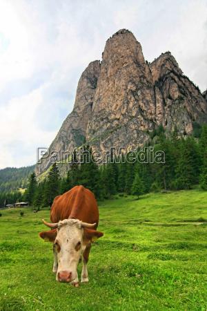 mountains, dolomites, animals, alp, rock, cow - 9118972