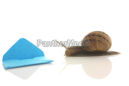 snail with mini envelope