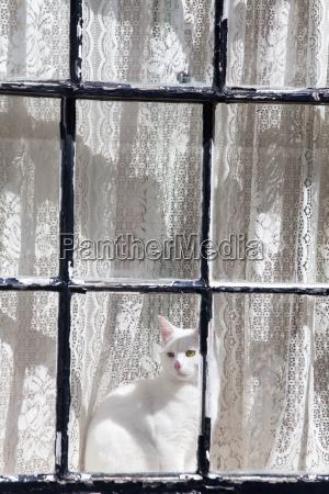 white cat in a window