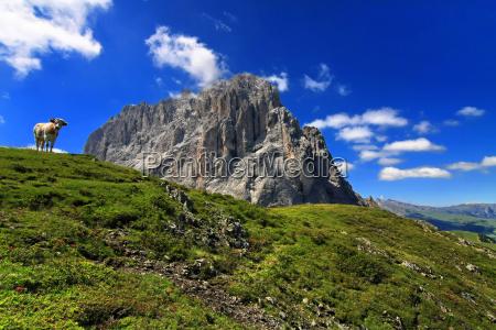 dolomites alp south tyrol summit rock