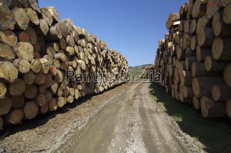 wood a renewable resource