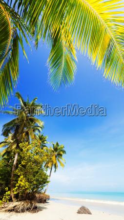 idyllic tropical beach vertical shot
