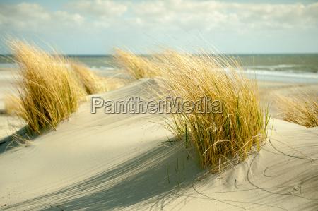 dune borkum