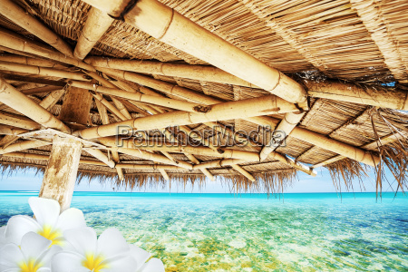 idyllic tropical scene with frangipani flowers