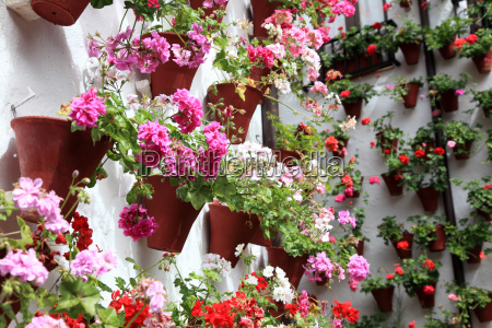 wall decorated with flowerpots in cordoba