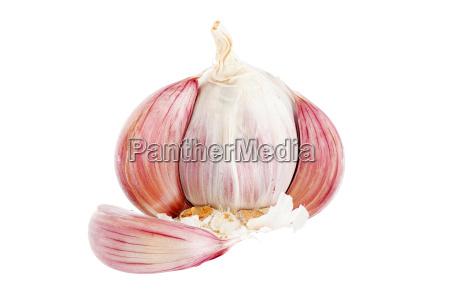 garlic bulb macro shot