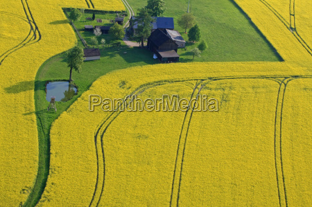 rape field spring aerial photograph farm