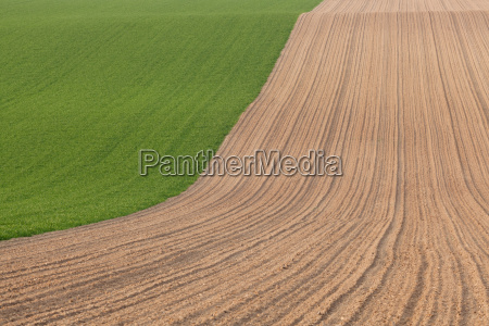 hill agriculture farming useful plant field