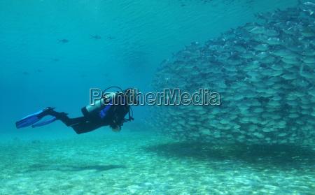 divers and mackerel