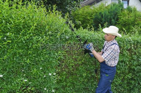 gardening cutting hedge