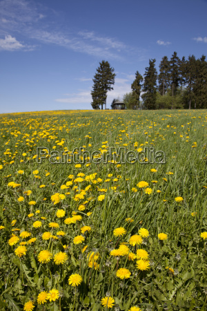green agriculture farming flower meadow look