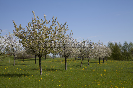 orchard in franconia