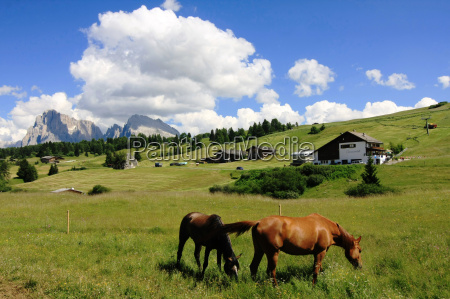mountains dolomites alp rock horse horses