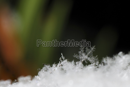 snow crystal background colorful