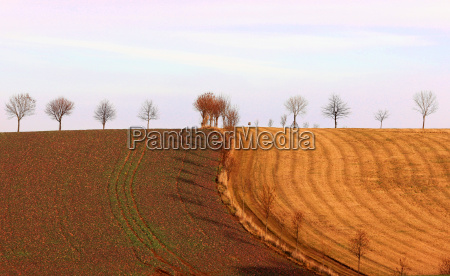 tree trees sunset fields acre setting