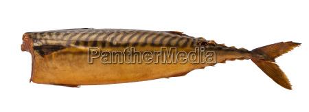 brazowe ryby wedzone pnia na bialym