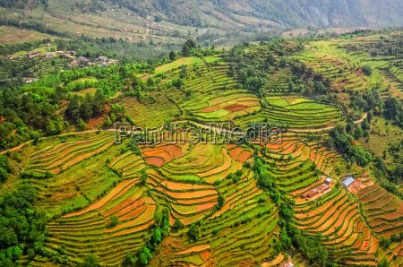 aerial view of colorful rice field
